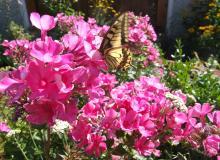 Blumen rund um den Bungalow