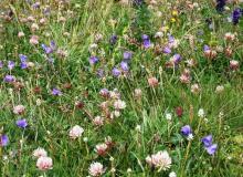 Artenvielfalt in den Wiesen