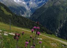 in der Asten, das höchstgelegene Dorf in Österreich- Ausblick