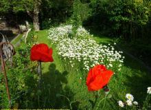 Blumenwiese Ostseite