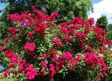 eine Blumenpracht