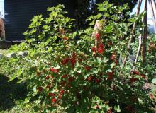 die Gartenfrüchte stehen auch den Gästen zur Verfügung