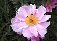 Blumen in unserem Garten