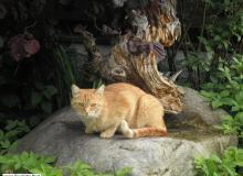 unsere Hauskatze Pauli