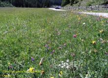 eine Blumenwiese auf 1880m Höhe