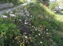 prachtvolle Blumen am Straßenrand