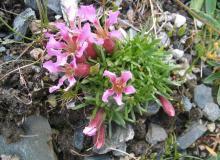 Gartenblumen überall