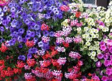 Blumen, wohin man schaut